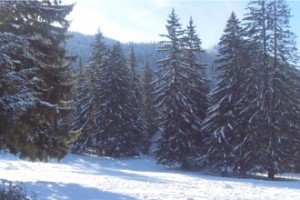 Pregatiri pentru iarna