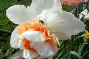 Gradina de Florii