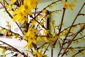 Cum să forțați ramurile să înflorească în casă