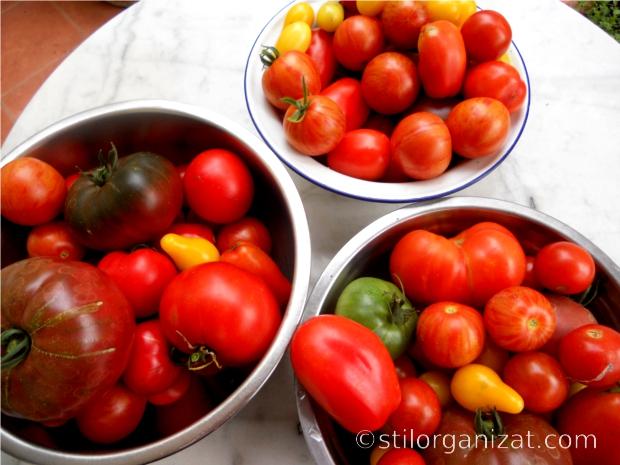 tomate pe terasa