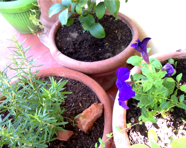 plante aromatice 1