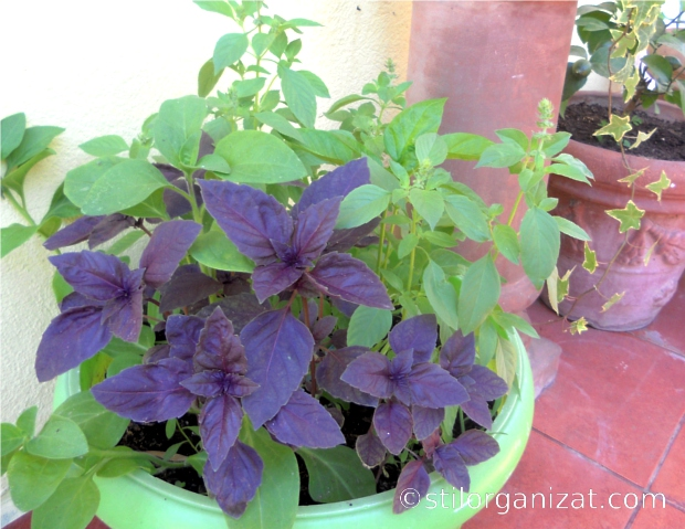 plante aromatice 3