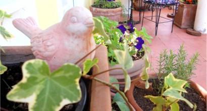 Cum am ajuns sa cultiv 27 de plante aromatice