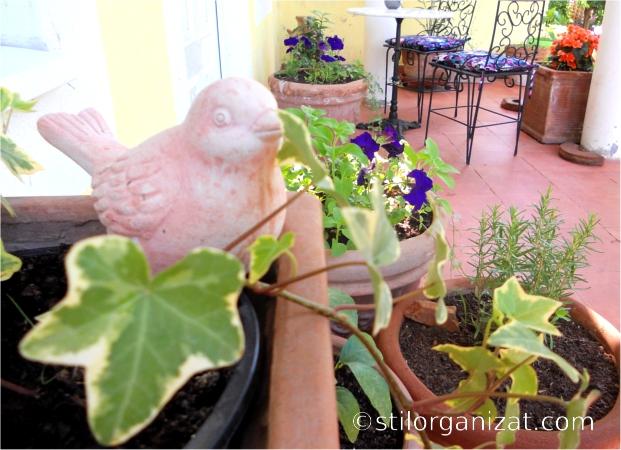 plante aromatice 4