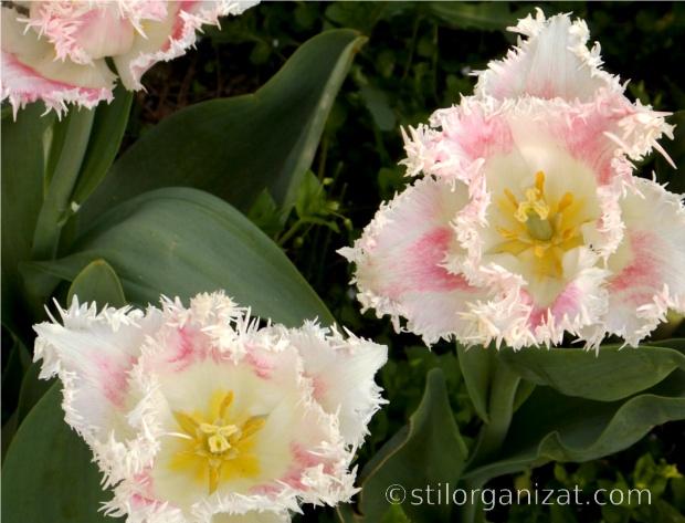 Galerie tulip