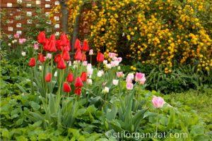 Grădina în martie - ce e de făcut