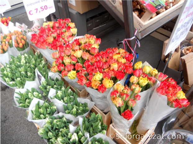 Utrecht plant market
