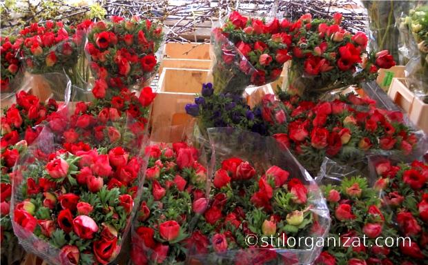 Utrecht market 4