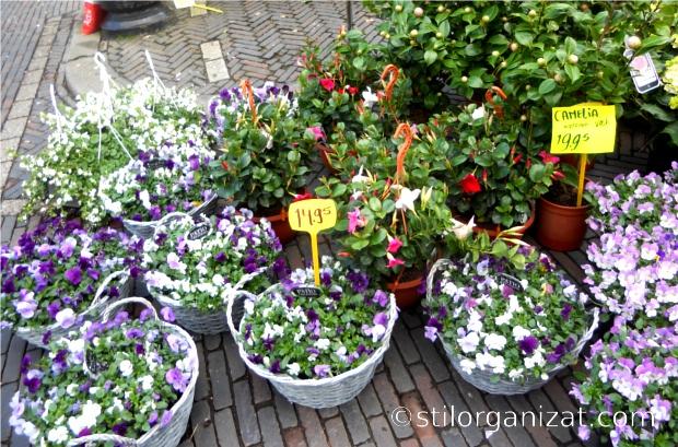 Utrecht market 8