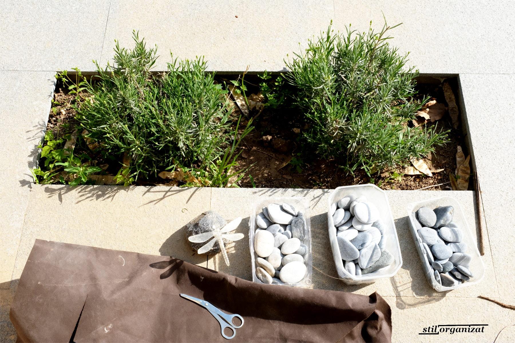 lavandula - materiale pentru jardiniera