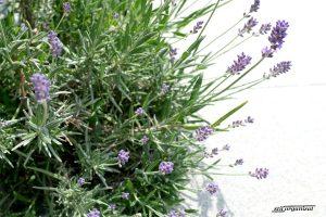 O jardiniera cu amintiri