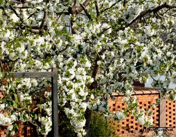 aprilie in gradina