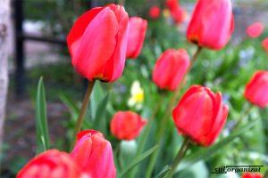 Grădina în aprilie - ce e de făcut