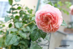 Grădina în august - ce e de făcut