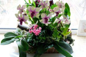 Aranjament cu plante în ghivece