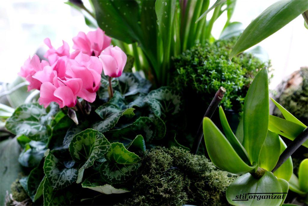 aranjament cu plante - detaliu