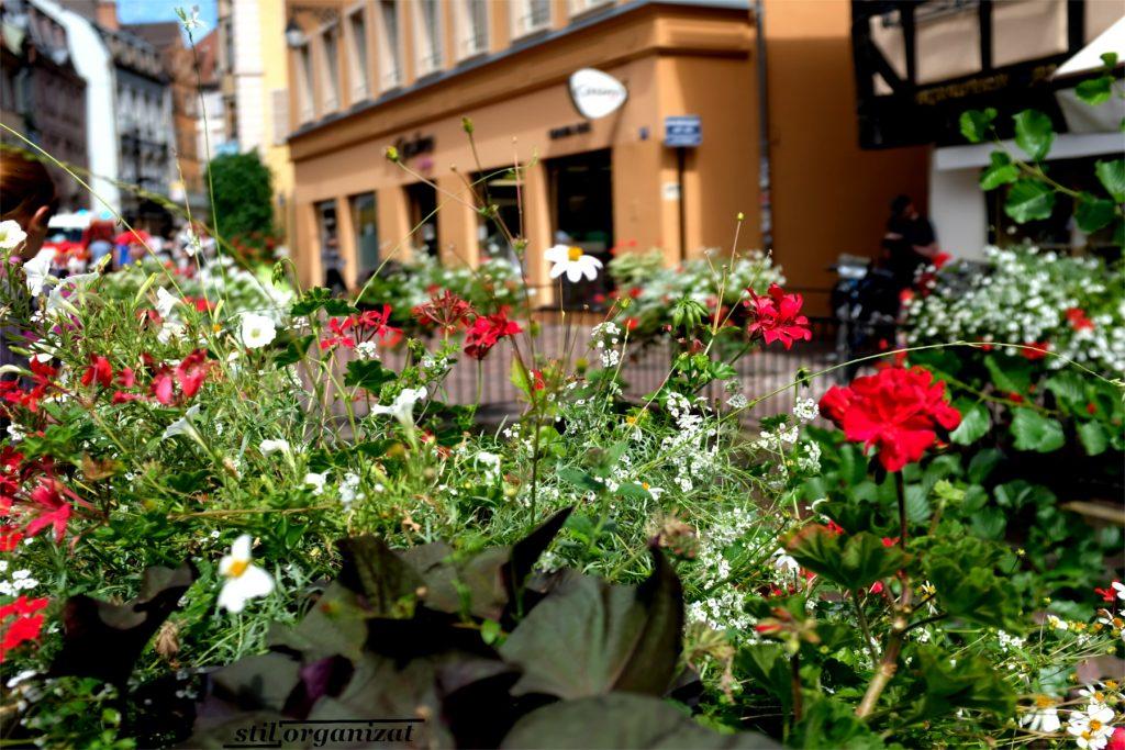 Flori în Colmar