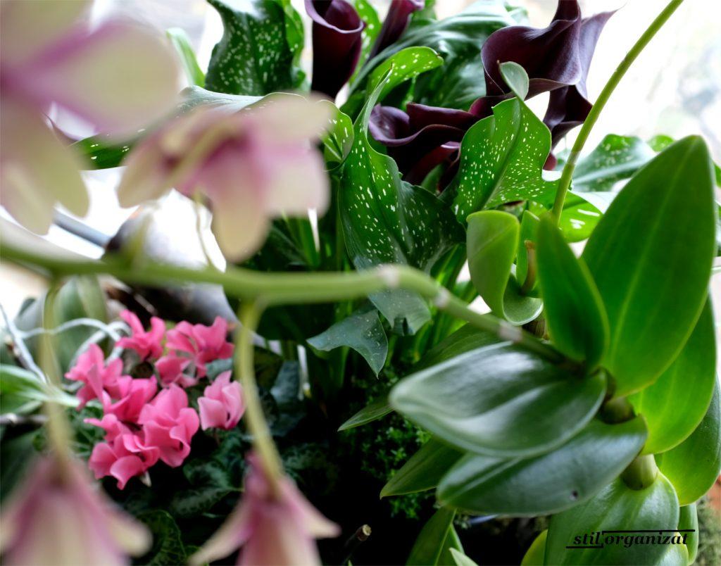 aranjament cu plante in ghiveci