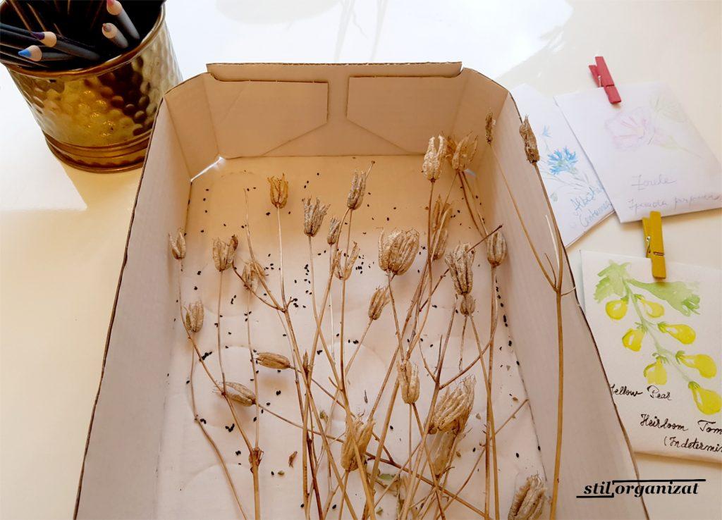 colectarea semintelor