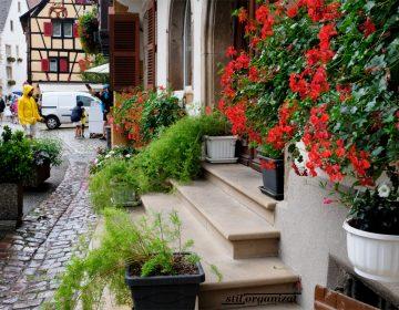 Flori in Alsacia