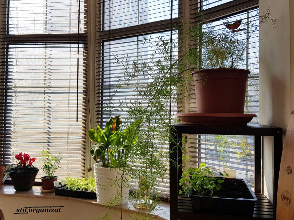 raft cu plante in bucatarie