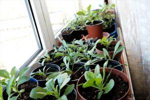 Jurnalul grădinii în martie