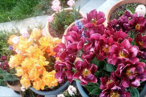 Jurnalul grădinii în aprilie
