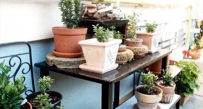galeria de topiary